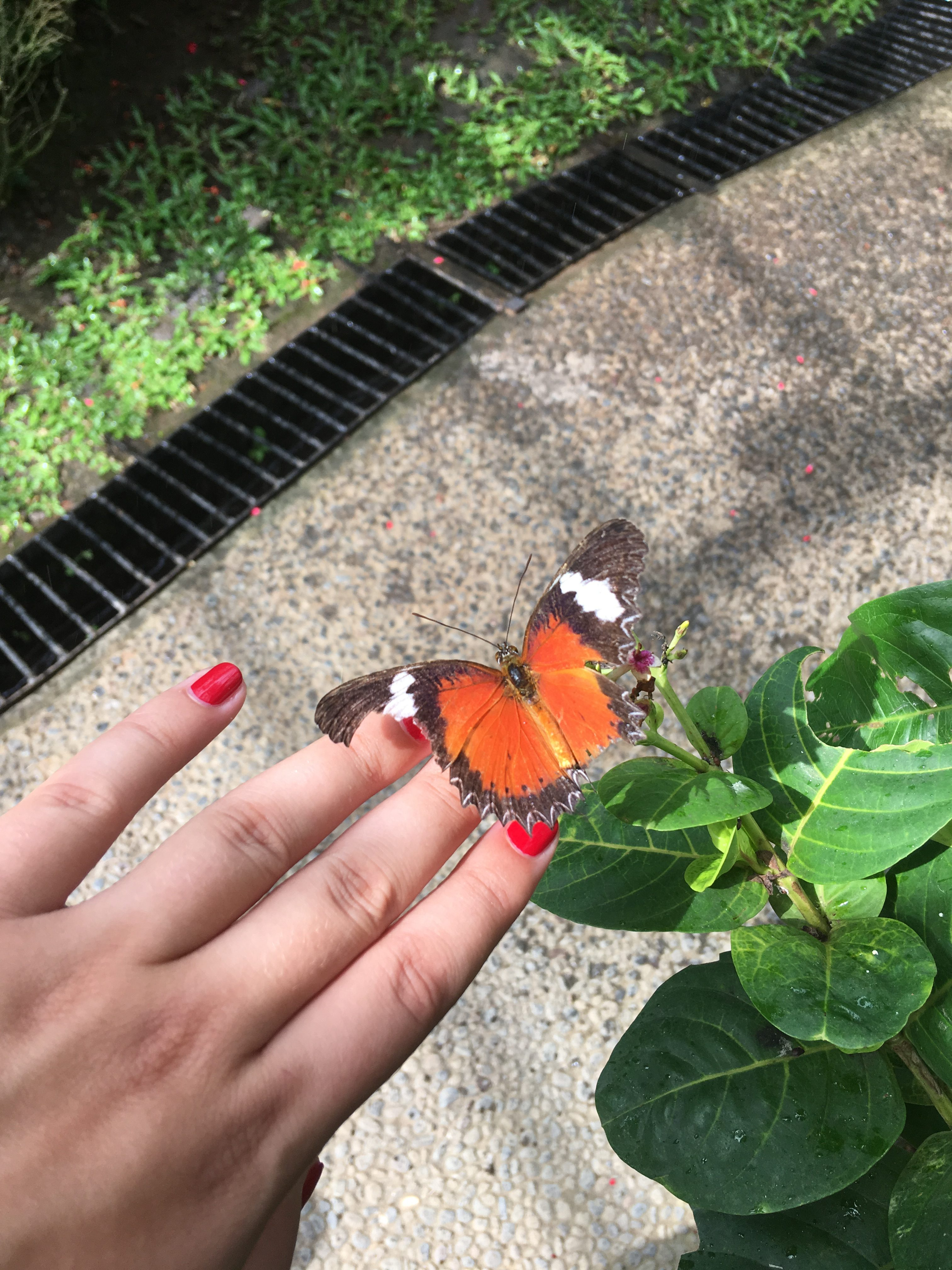 Butterfly park Kemenuh